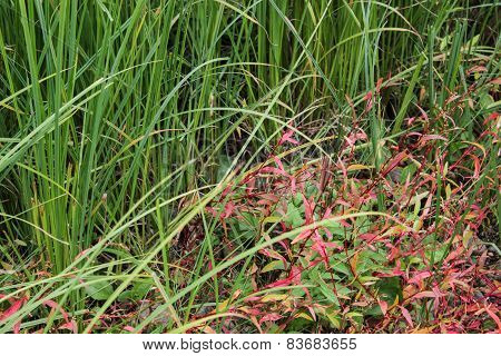 Green marsh grass