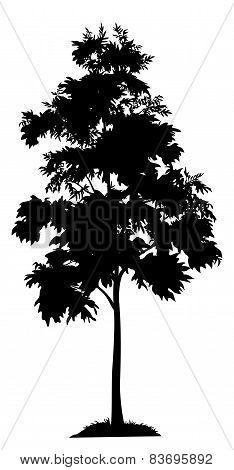 Acacia tree and grass silhouette