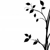 image of decorative  - Black and white silhouette of a tree natural decorative element to use as a background - JPG