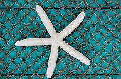 foto of wooden shack  - Blank antique teal blue aged wooden sign and fish netting background with white starfish - JPG