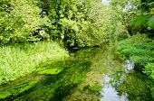 foto of fresh water fish  - The clear waters of the River Alre in Alresford - JPG