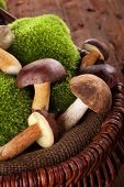 foto of wooden basket  - Fresh delicious mushrooms with moss in wooden basket on brown wooden background - JPG