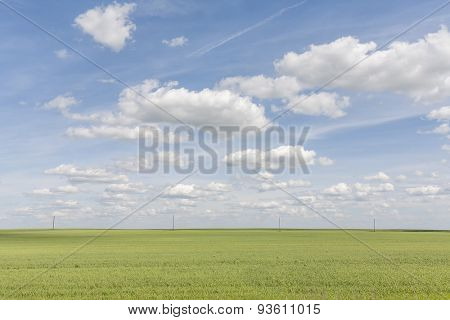The field under the blue sky