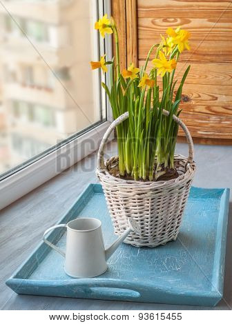 Daffodils In The Basket On The Window