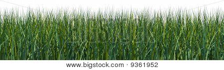 Rendered Grass Field