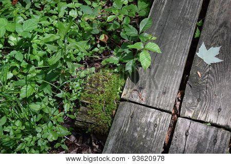 moss on a walkway