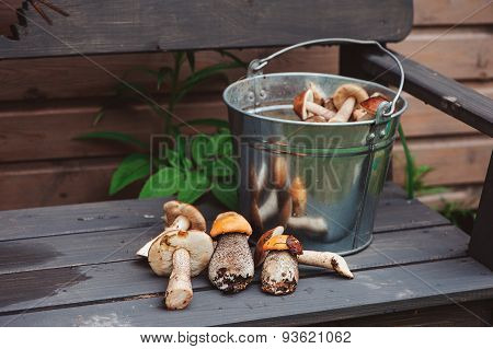 wild edible orange and brown cap boletus mushrooms on wooden bench