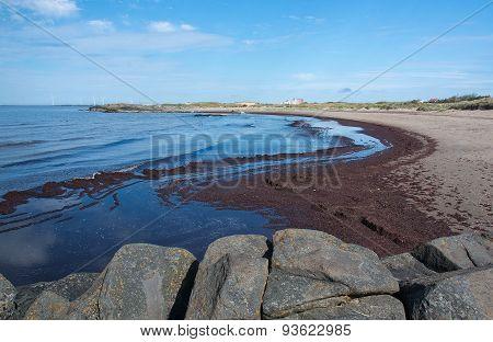 Seaweed on sandy beach