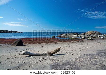 Driftwood on a sandy beach