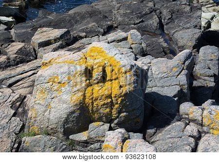 Yellow lichen closeup