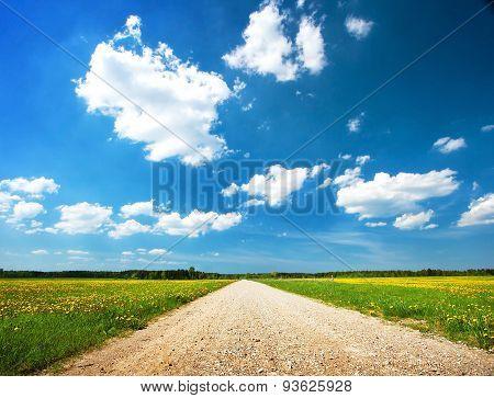 Road on dandelion field