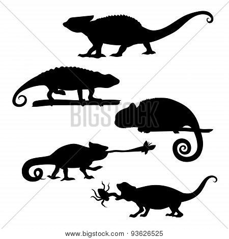 Chameleon set vector