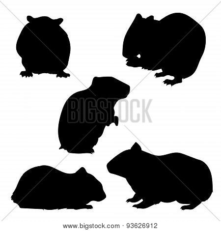 Hamster set of silhouettes