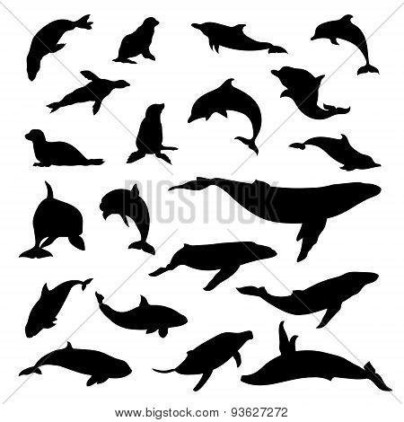 Set of marine mammals vector