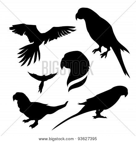 Parrot set vector