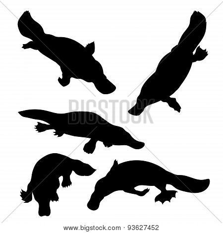 Platypus set vector