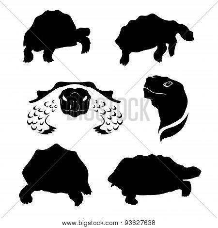 Tortoise set vector