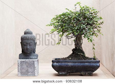 buddha statue beside bonsai tree