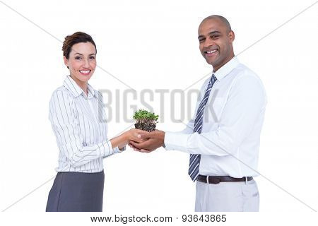 Business colleagues holding plant and looking at camera on white background