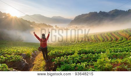 Chiang Mai, Thailand-december 11 : Asian Woman Traveller Standing  On The Peak Of Strawberry Field W