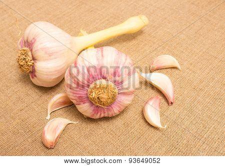 Fresh Garlic On Canvas Close Up