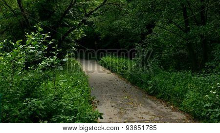 Lane to the woods