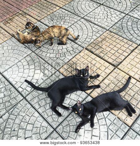 Thai cat on a street in Bangkok Thailand.