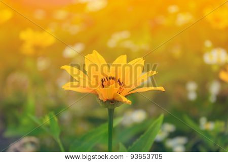 Yellow Summer Flower