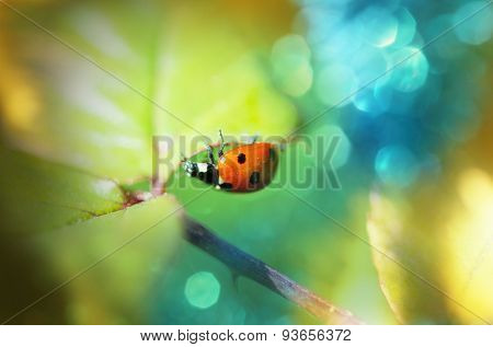 Ladybug in grass close up