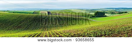 Panorama of Moravian rolling landscape with trees. Moravia, Czech Republic