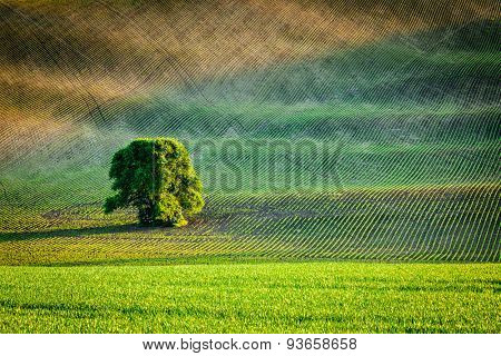 Lonely tree in ploughed field, Moravia, Czech Republic