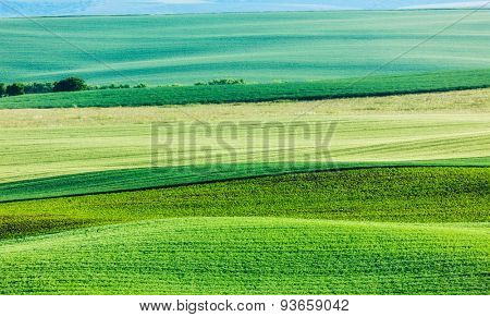 Abstract pattern of rolling striped fields in summer. Moravia, Czech Republic