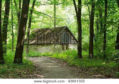 Forest Hut With Benches