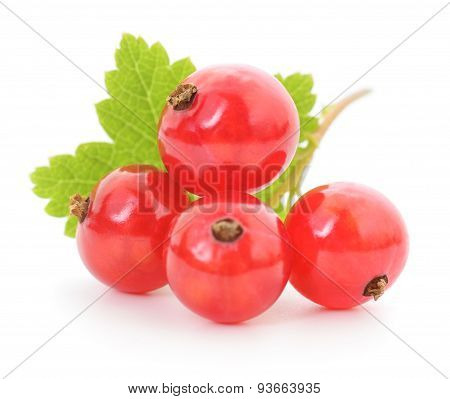 Four Red Currants