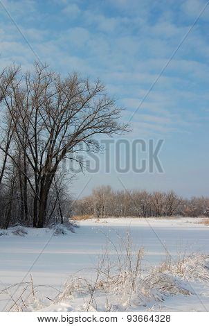 Winter forest and field covered by snow.