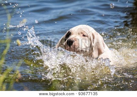 Puppy learning to swim