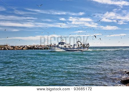 Fishing schooner comes into the port, surrounded by seagulls