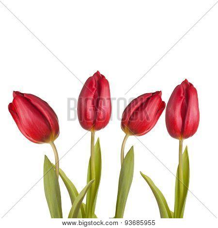 Tulips Bouquet Of Three