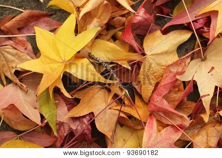 autumn leanes up close