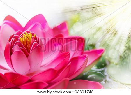 Pink Lotus Background
