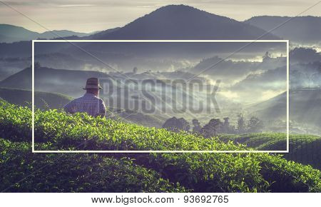 Farmer Tea Plantation Malaysia Fog Stunning View Nature Concept