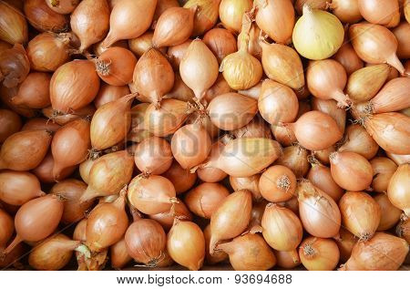 Bulb Onions