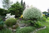 pic of conifers  - Beautiful spring garden design with flowering rhododendron and conifers - JPG