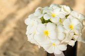 stock photo of plumeria flower  - Flower Bouquet of Plumeria on the beach - JPG