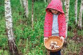 stock photo of edible  - cute child girl gathering wild edible mushrooms in the forest - JPG