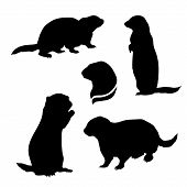 foto of gopher  - Gopher set of silhouettes vector - JPG