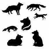 pic of animal silhouette  - Fox set of black silhouettes - JPG