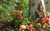 stock photo of begonias  - the begonia Growing vegetables in vegetable garden - JPG