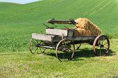 picture of hay bale  - Old horse - JPG