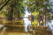 picture of vegetation  - Tropical mangrove and vegetation in Cambodia - JPG